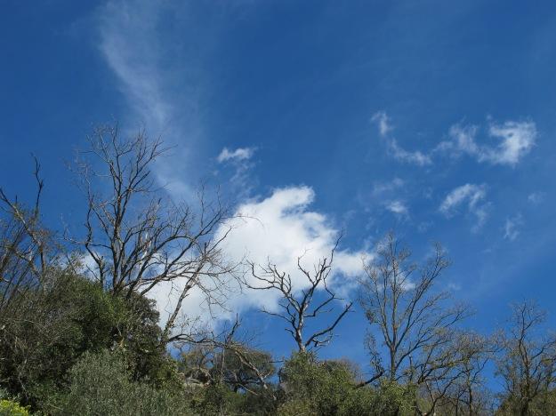 blue sky1 13-3-13