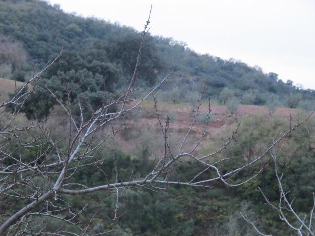 valley @ dusk3 16-3-13