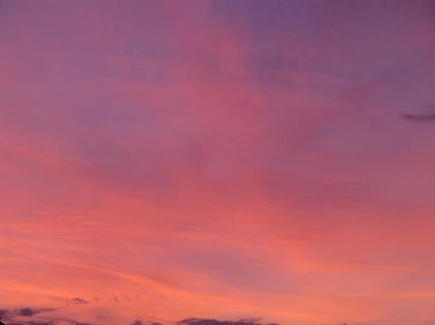apricot sunset1 22-4-13