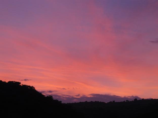 apricot sunset3 22-4-13