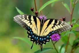 [photo: insects-morphology.blogspot.com]