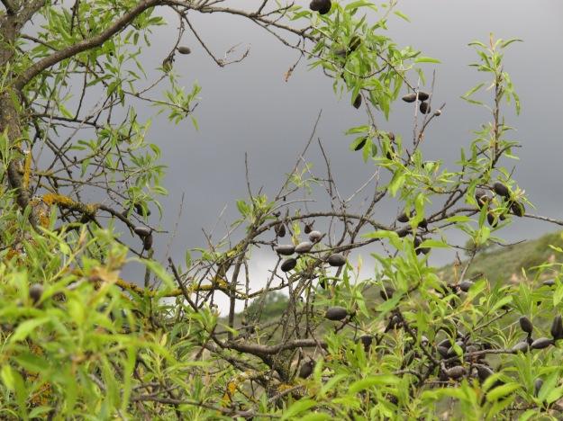 the rain in spain1 29-4-13