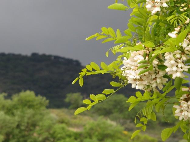 the rain in spain2 29-4-13
