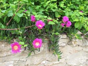 higo - flowering2 1-5-13