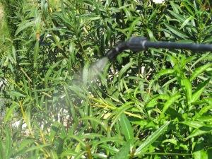 D spraying 12-7-13