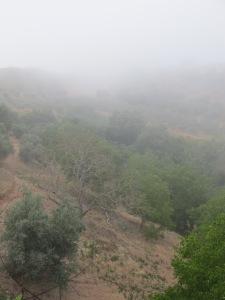 mist at 8am1 13-7-13