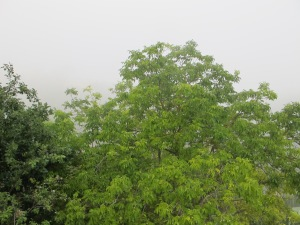 mist at 8am2 13-7-13