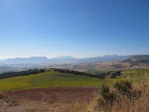 field of sunflowers, looking towards Cuevas del Becerro 26-7-13