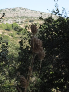 seedhead 25-8-13