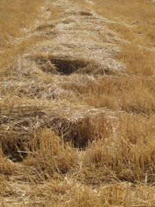 straw stripes 29-7-13
