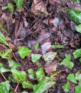 wet leaves 16-2-10