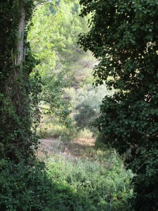 from the thyme track, looking to the other riverbank 25-8-13