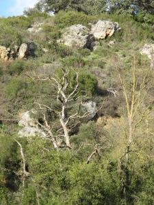 bare tree1 26-3-13