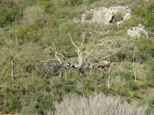bare tree2 26-3-13