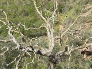 bare tree3 26-3-13