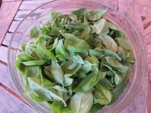 bowl of basil leaves 8-10-13