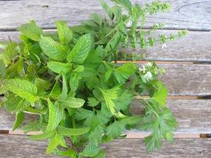 bunch of herbs 6-10-13