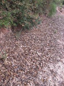 fallen leaves 4-10-13