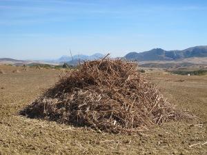 heap of stalks2 12-10-13