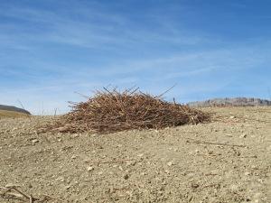 heap of stalks3 12-10-13
