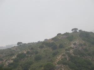 hillside opposite 26-8-13