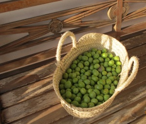 2 basket of just-picked olives for brining 9-11-11