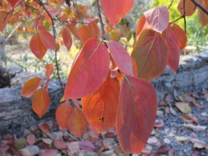 bronze leaves1 17-11-13