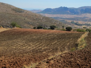 field of striped ploughed earth - looking towards sierra de las nieves 12-10-13 (2)