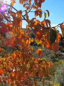 golden leaves1 17-11-13