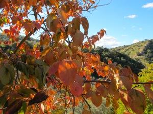 golden leaves2 17-11-13