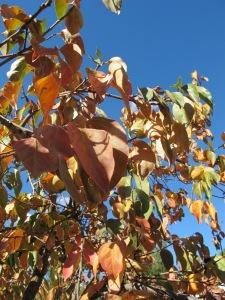golden leaves3 17-11-13