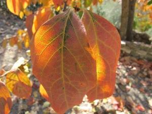 leaf close-up1 17-11-13