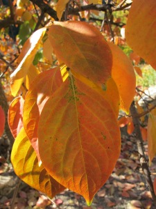 leaf close-up2 17-11-13