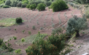 olive field 30-5-11
