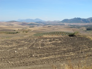 patchwork of fields looking towards sierra de las nieves 12-10-13 (2)