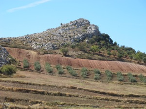 pink earth drilled for olive saplings, on road to canete 12-10-13 (2)