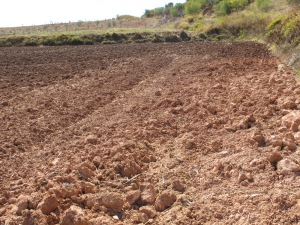 pink to dark earth - ploughed field on road to canete 12-10-13 (2)