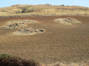 small outcrops, farmer ploughs around 12-10-13