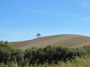 tree on the horizon 12-10-13