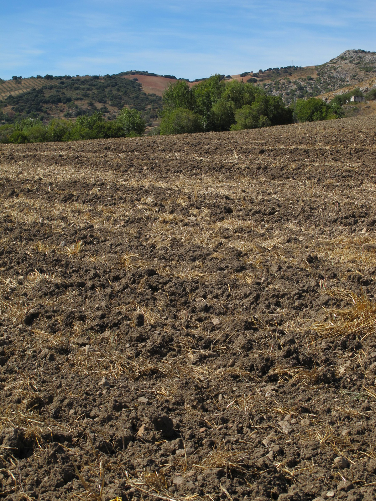 Soil variations notes on a spanish valley for Another name for soil