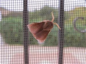 moth at window 17-11-13