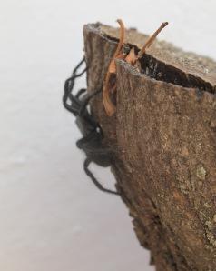 spider on log 12-7-11