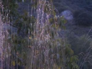 sprinklers1 17-11-13