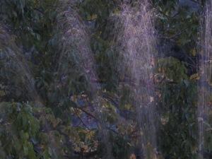 sprinklers2 17-11-13