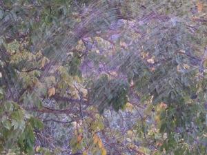 sprinklers4 17-11-13