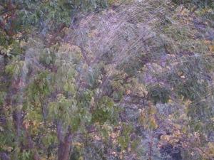 sprinklers5 17-11-13