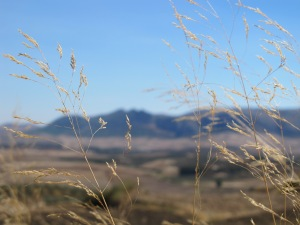 autumn sky, dried grasses 12-10-13