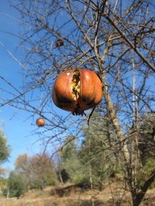 baubles on a tree - pomegranates1 5-1-14