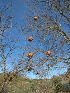 baubles on a tree - pomegranates2 5-1-14