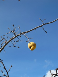 baubles on a tree - quince2 4-1-14